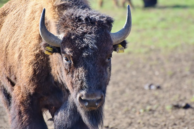 London Poet Rescued from Buffalo at Dublin Hotel
