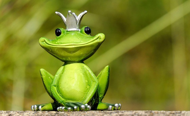 Silly funny frog